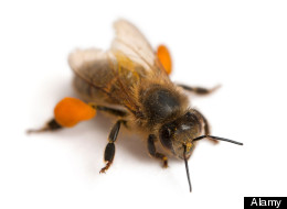 the photo from Huffington Post -- Bee positive, I guess
